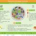 Zdrowy talerz – nowe zalecenia żywieniowe